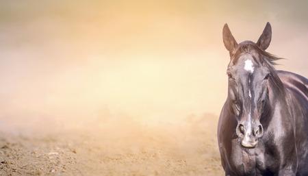 Horse on sand background, banner for website