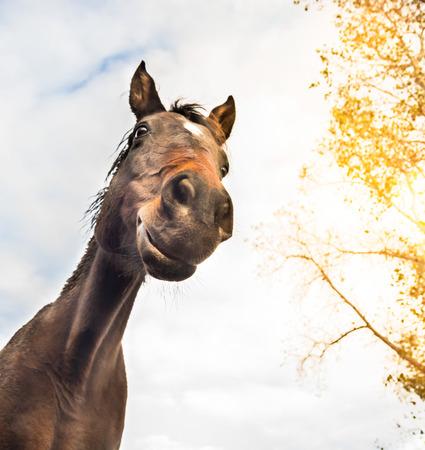 下から空とツリー ビューに対して面白い馬に直面します。 写真素材