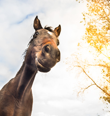 funny horse face against sky and tree, view from below