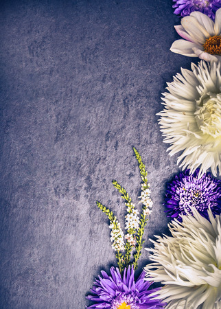 blue toned: Composition of white dahlias and asters blue on dark background, top view, toning