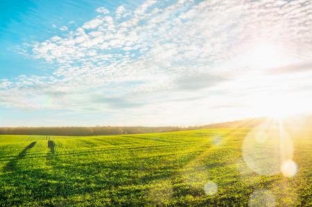 Morgen Landschaft mit grünen Feld, Spuren von Traktor in Sonnenstrahlen Standard-Bild