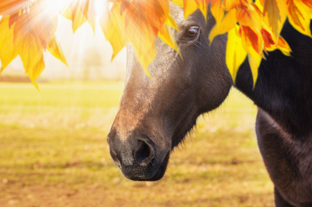 Image result for horse autumn