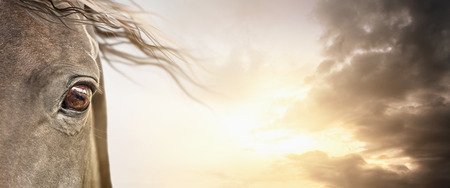 Eye of horse with mane on cloudy sky, banner background