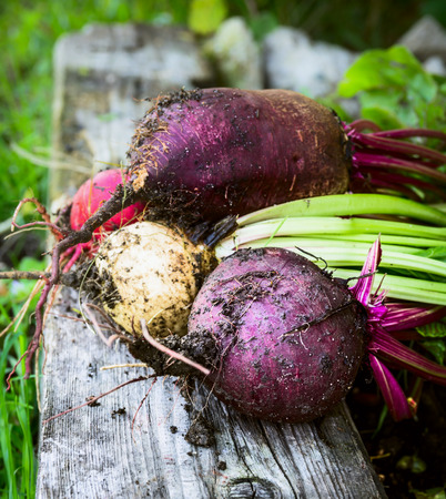 close p: Red beet various on old wooden beam and grass in garden Stock Photo
