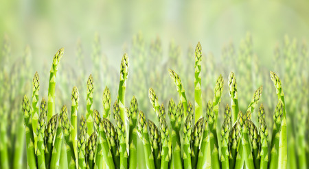nahaufnahme: asparagus field, close up, banner for website Stock Photo