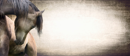 beautifully: horse with beautifully curved neck on texture background, banner for wesite