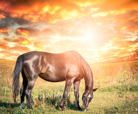 Autumn landscape with grazing black horse against  sunset sky with clouds photo
