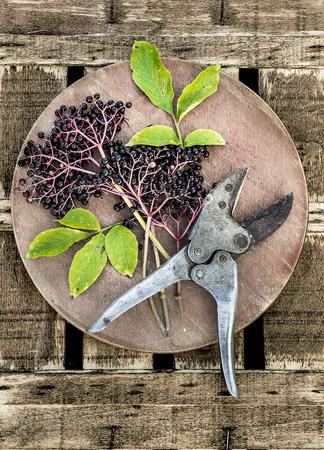 Elder branch with berries and vintage secateurs on wooden board Reklamní fotografie