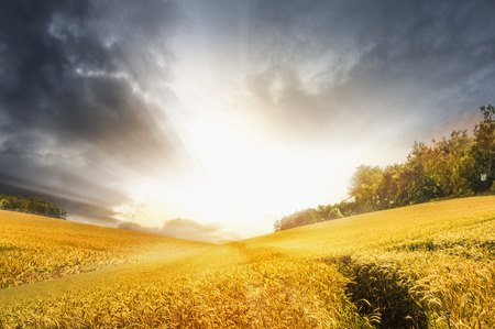 Autumn landscape with wheat field over stormy sunset sky, nature background photo