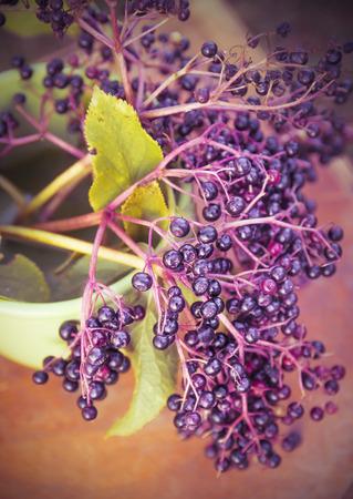 elder tree: bunch of elderberries, toning Stock Photo