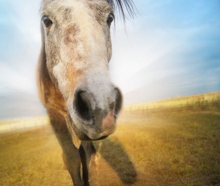 Gray Funny horse on autumn field background with blue sky photo