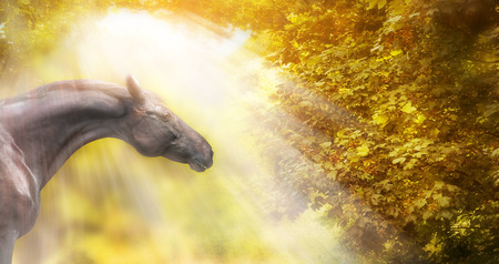 Horse with beautiful neck in autumn sunlight, banner photo
