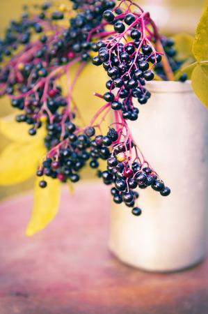 elder tree: ripe elderberries bunch on table in autumn garden, toned