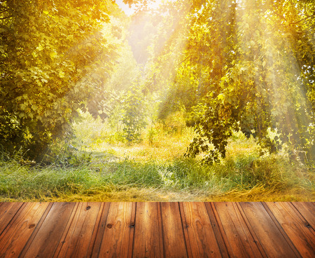 Autumn nature background with wooden terrace, fall tree and sunshine.