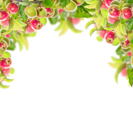 Frame with apple branch with apples and leaves isolated on white background Stock Photo