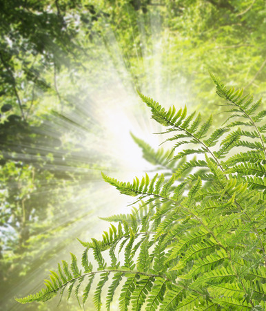 flagging: Far Bush against background of sunlight through leaves