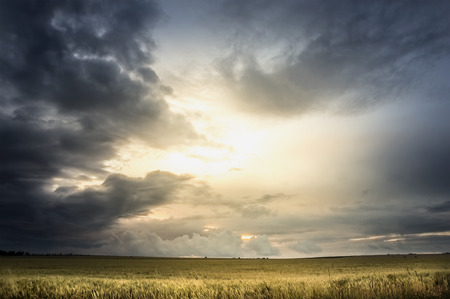 Stormy sky over wheat field