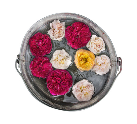 seau d eau: fleurs roses dans un seau d'eau, isolé sur fond blanc