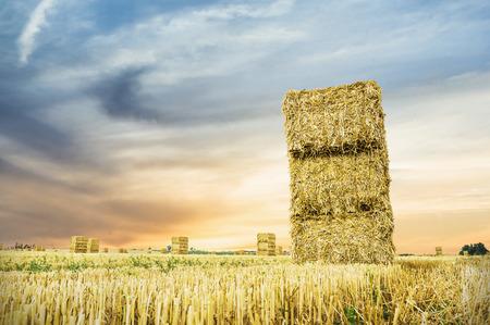 bale: straw bale in sunset light, landscape