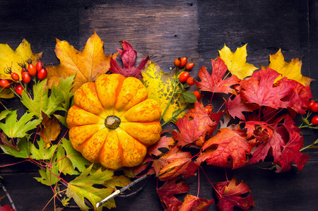 Beautiful pumpkin on colorful autumn leaves, dark wooden background, top view photo