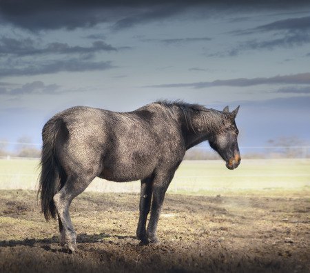 very dirty: Very Dirty horse in clay crust stands on pasture over sky Stock Photo