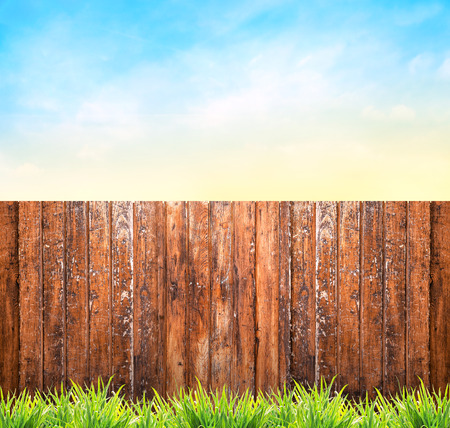 garden landscaping: Background with wooden fence, grass and blue sky