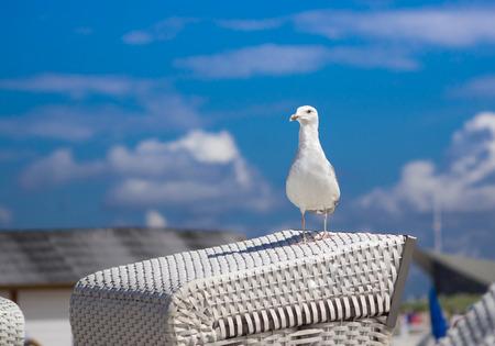 gaviota: gaviota en silla de playa blanca Foto de archivo