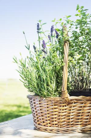Lavandula basket on garden table photo