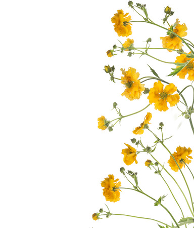Floral border of yellow flowers, isolated on white background