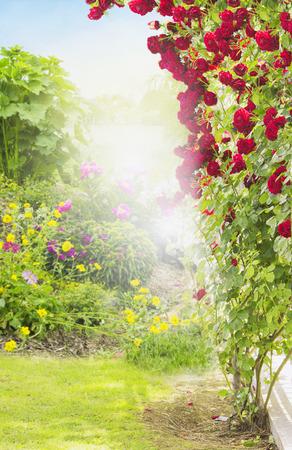 rosas rojas: Rambler rosa roja en el jard�n