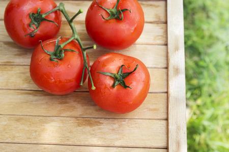 tomate de arbol: Nueva cosecha de tomate en mesa de madera en el jardín, vista desde arriba Foto de archivo
