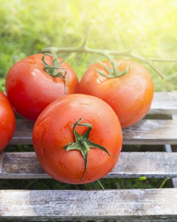 tomate de arbol: tomates en la caja de madera en el fondo de la luz del sol y la hierba en el jardín