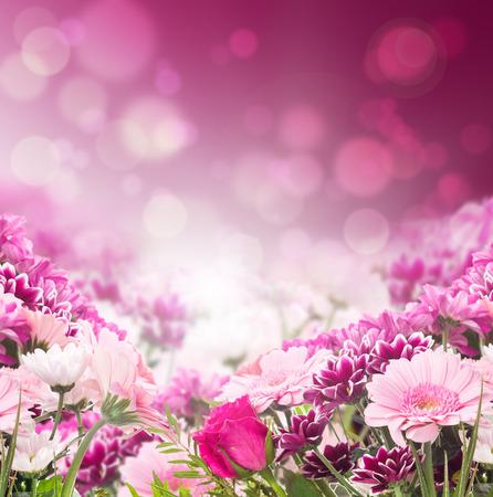 borde de flores: flores de color rosa de colores sobre fondo bokeh