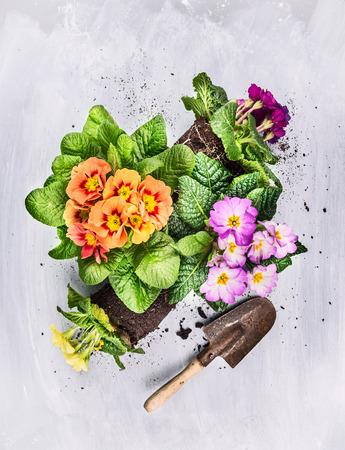 ショベル、トップ ビューで灰色の木製の背景に園芸の夏の花