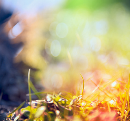 out of focus: blurred multicolored nature background with sunshine,light and bokeh