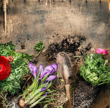herramientas de trabajo: Jardinería primavera con la cucharada en el fondo de madera rústica, vista desde arriba, el lugar de texto