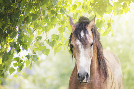 Volbloed paard op de achtergrond van de zomerzon bladeren