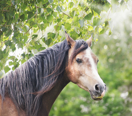 penned: Brown horse with long mane in sun and foliage