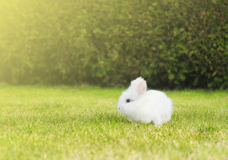 little white bunny on  lawn in garden Stock Photo - 37810238