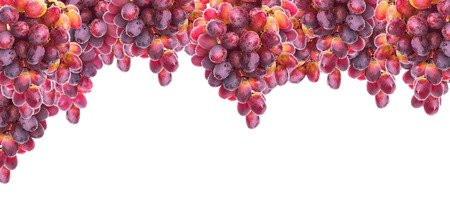 Hanging bunch of red yellow grapes with water drops, isolated, banner, panorama