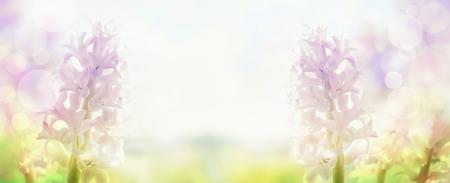 pale colours: pink hyacinths  in back light , banner for website