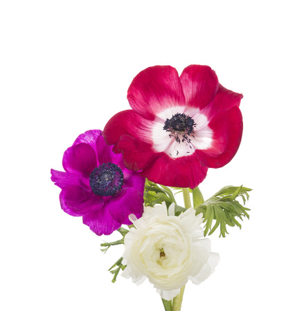 anemones: red and lilac anemones and buttercups, isolated