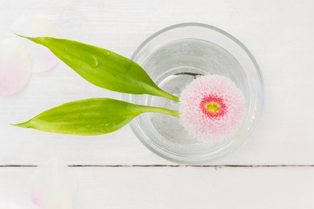 bamboo leaf: Pink daisy with two bamboo leaves in glass of water on white table, spa, top view