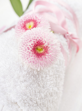 two Pink daisies flowers on White rolled up towel , close up photo