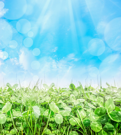 Trifolium field over blue sky with sun ray and bokeh, close up, nature background photo