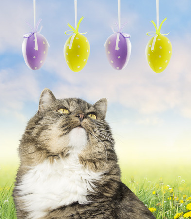 Cat and easter eggs on spring meadow with blue sky background. photo
