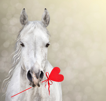 red horse: Horse Keep Heart Lollipop for Valentine