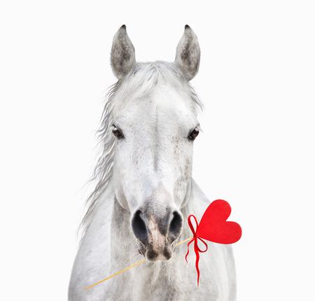 Wit paard met hart in de mond geïsoleerde Stockfoto