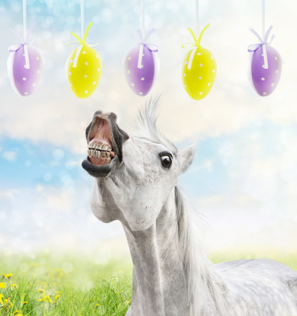 White horse runs to hanging Easter eggs on spring background