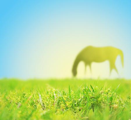 馬 grasing のスプリング フィールド